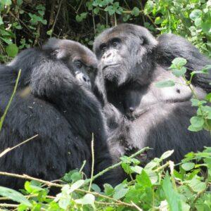 4 Day Rwanda Small Group Trekking Tour