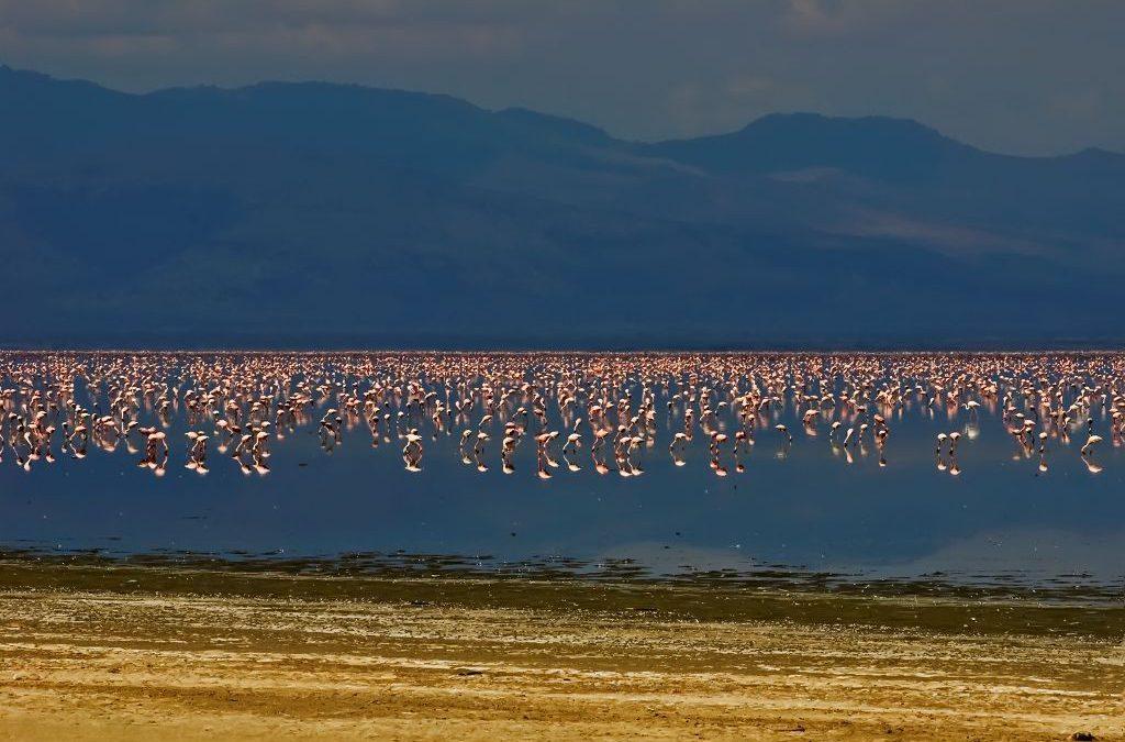 Kenya Tailor-made Safaris & Tour Destinations