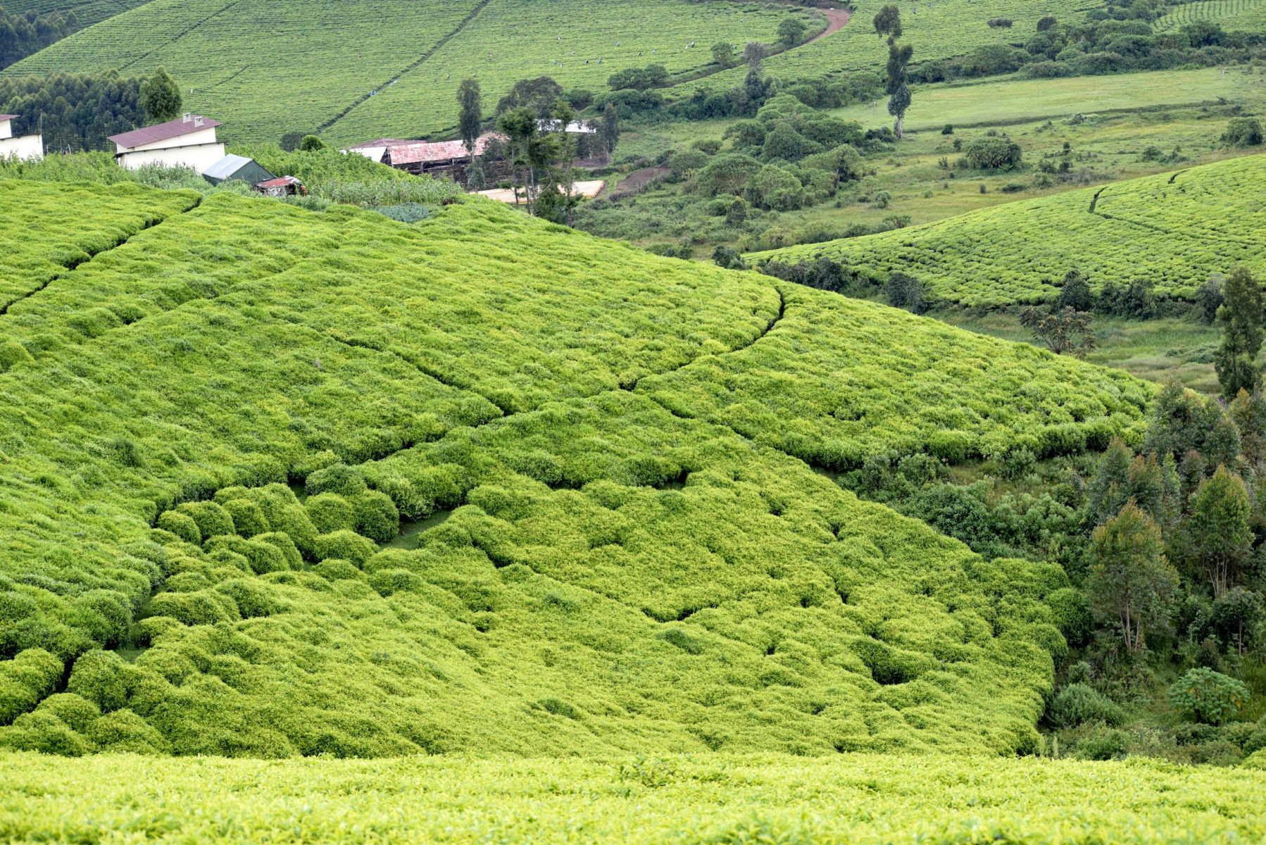 Burundi green tour