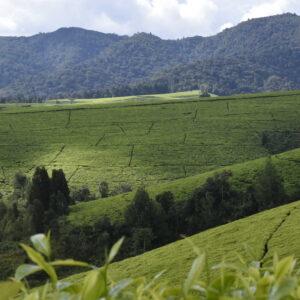 Green Burundi Tour